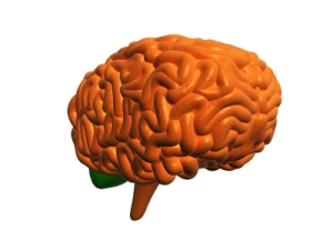 www.freedigitalphotos.netimages3d-human-brain-photo-p190728
